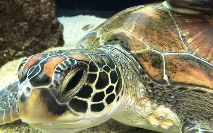 山陰海岸ジオパーク海と大地の自然館に新しい仲間が加わりました。